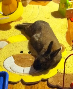 Fergie lays out on the lion play rug.
